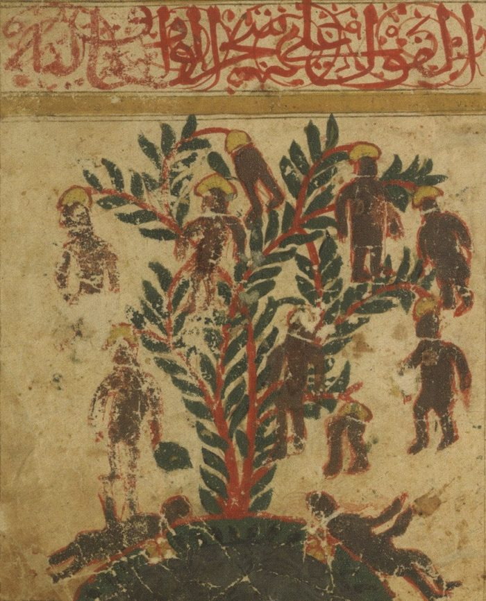 дерево вак-вак Зотов